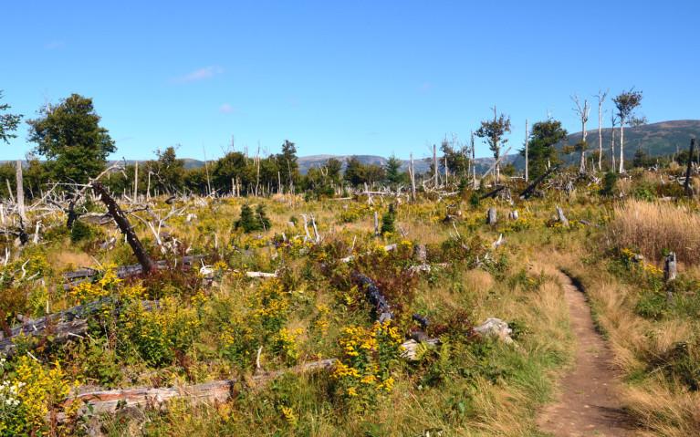 Walking Along the Baker's Brook Falls Trail :: I've Been Bit! A Travel Blog