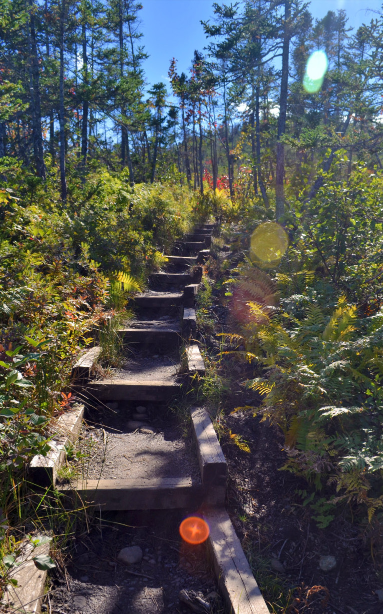 Uphill Along the Lookout Trail :: I've Been Bit! A Travel Blog