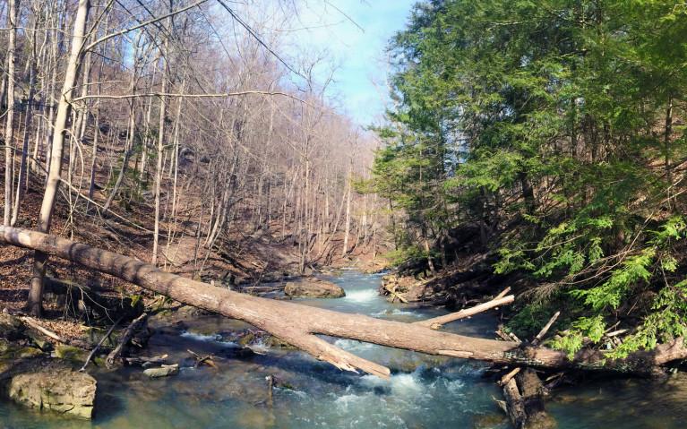 Upstream Beaver Dams Creek :: I've Been Bit! A Travel Blog
