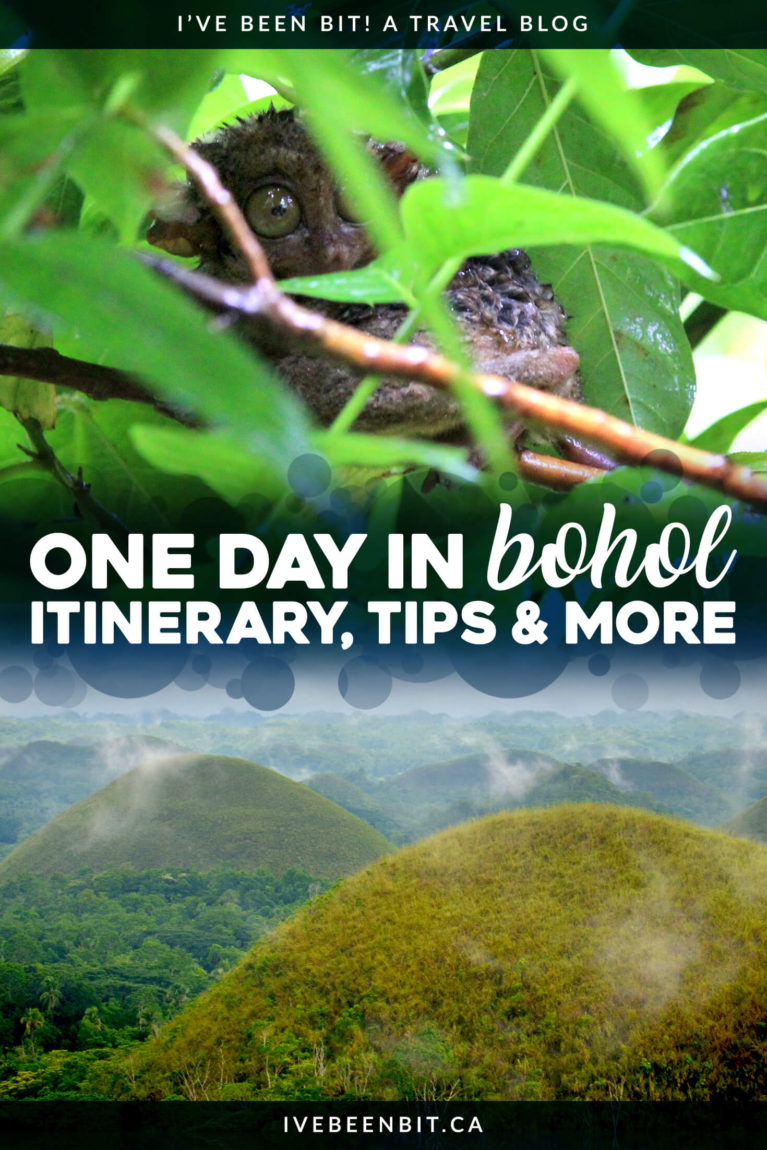 When visiting The Philippines, you have to make a trip to Bohol! Home to the Chocolate Hills, tarsiers and more, there's so much to discover. Even if you only have time for a day tour, you have to spend at least one day in Bohol! | #Travel #ThePhilippines #SoutheastAsia #Bohol #ChocolateHills #Tarsiers | IveBeenBit.ca