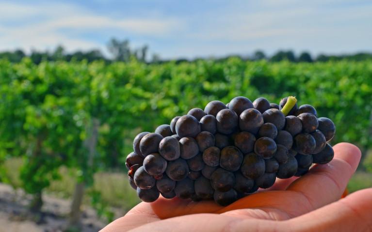 Wine Tasting Niagara on the Lake at Small Talk Vineyards :: I've Been Bit! A Travel Blog