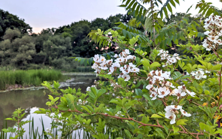 Summer Flowers Along the Green Ribbon Trail :: I've Been Bit! Travel Blog