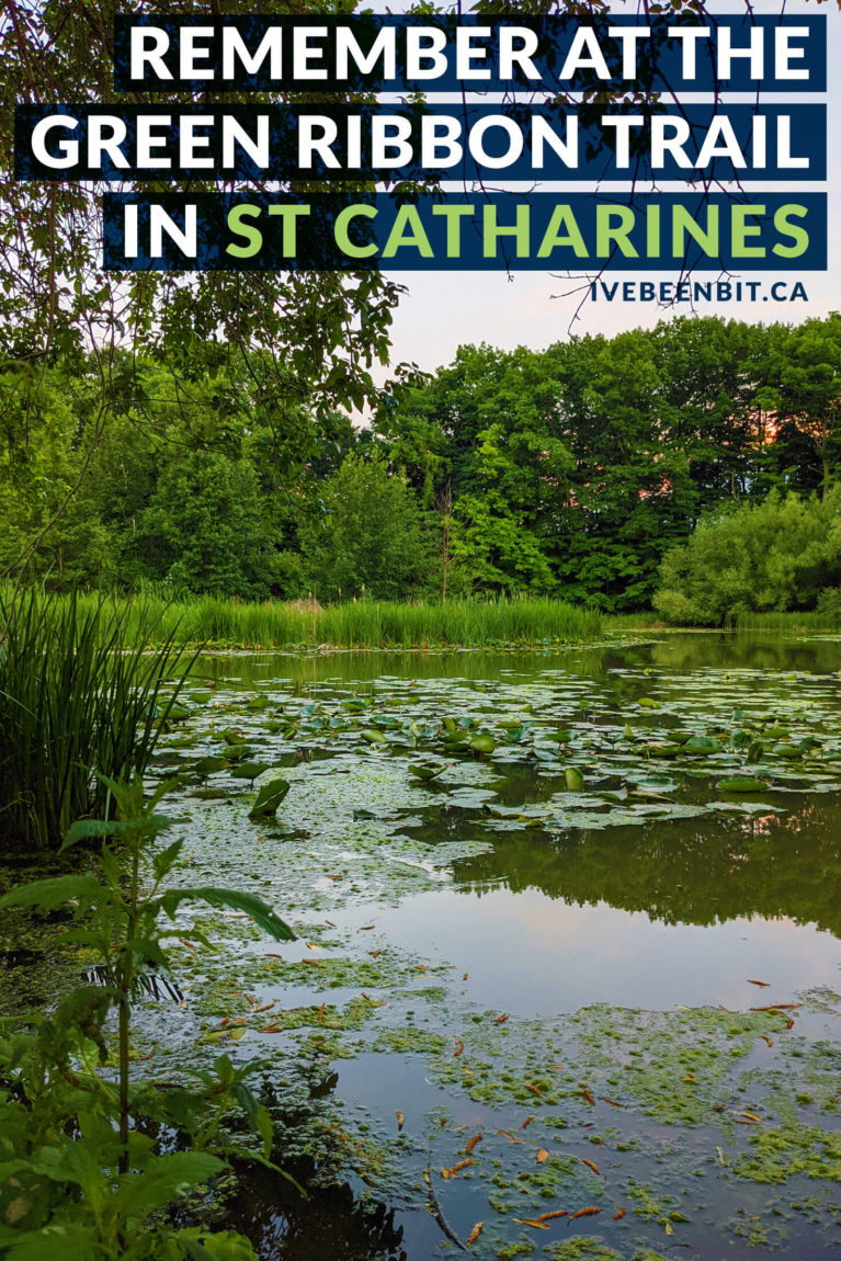 A little spot in St Catharines that you might miss if you blink, but the perfect dose of nature. Take some time to reflect and enjoy this St Catharines hiking trail - the Green Ribbon Trail. This is a Niagara hiking trail you should visit! | #Travel #Canada #Ontario #Hiking | Hiking in the Niagara Region. St Catharines hikes. Niagara Hiking. Niagara Walking. | IveBeenBit.ca