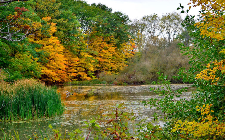 Views of Martindale Pond in Autumn from the Green Ribbon Trail :: I've Been Bit! Travel Blog