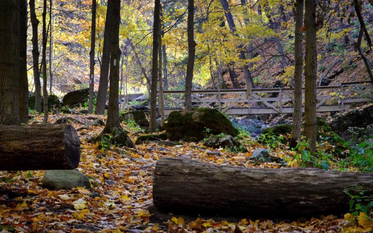 Bridge Leading to Rockway Falls :: I've Been Bit! A Travel Blog
