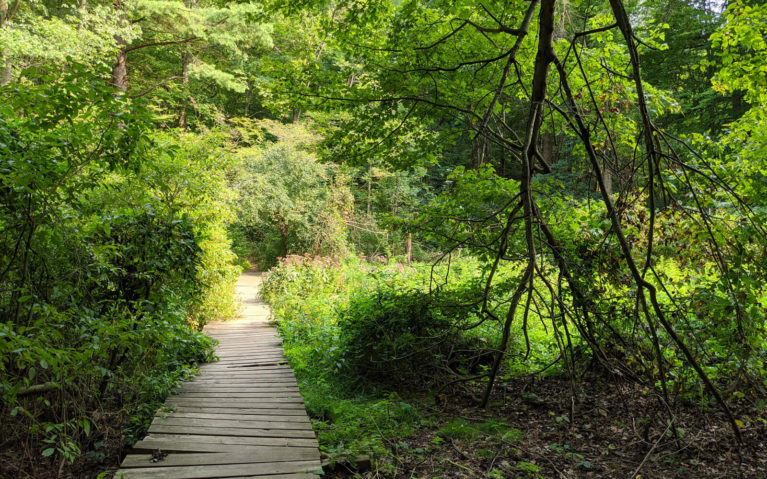 Boardwalk into the Forest at the St Johns Conservation Area :: I've Been Bit! Travel Blog