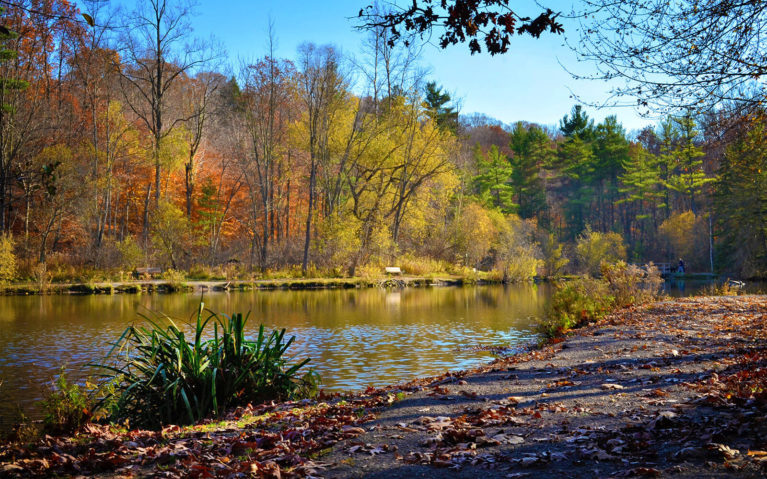 Photo of the St Johns Conservation Area Pond in Late Autumn :: I've Been Bit! Travel Blog