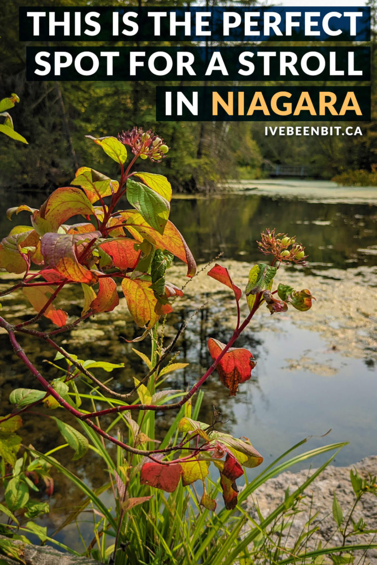 Looking to tackle some crowd-free hiking trails? You won't want to miss the Saint Johns Conservation Area in Fonthill! | Niagara Hiking | Niagara Falls Hiking | Hiking Near Niagara Falls Canada | Niagara Falls Canada Hiking | Hiking Trails Niagara | Ontario Hiking Trails | Hiking Ontario | Hiking Trails in Ontario | Hiking Trails Southern Ontario | #Ontario #Hiking | IveBeenBit.ca