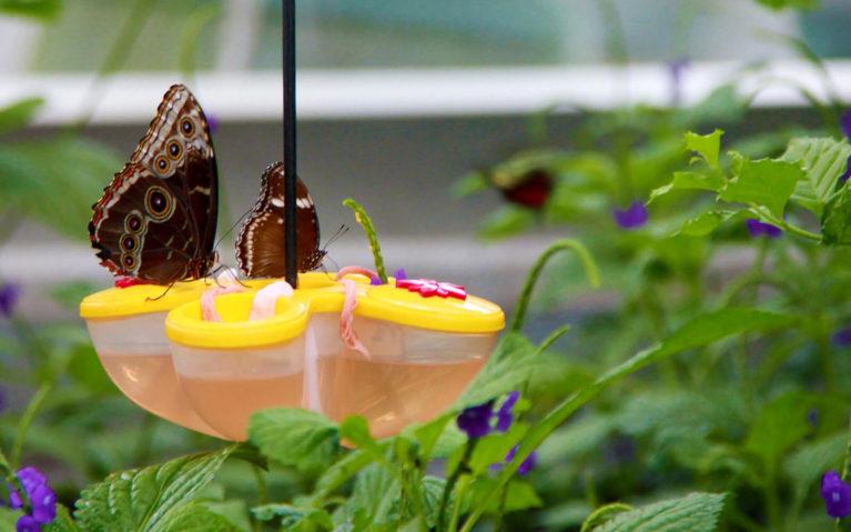 Butterflies on a Yellow Feeder :: I've Been Bit! Travel Blog