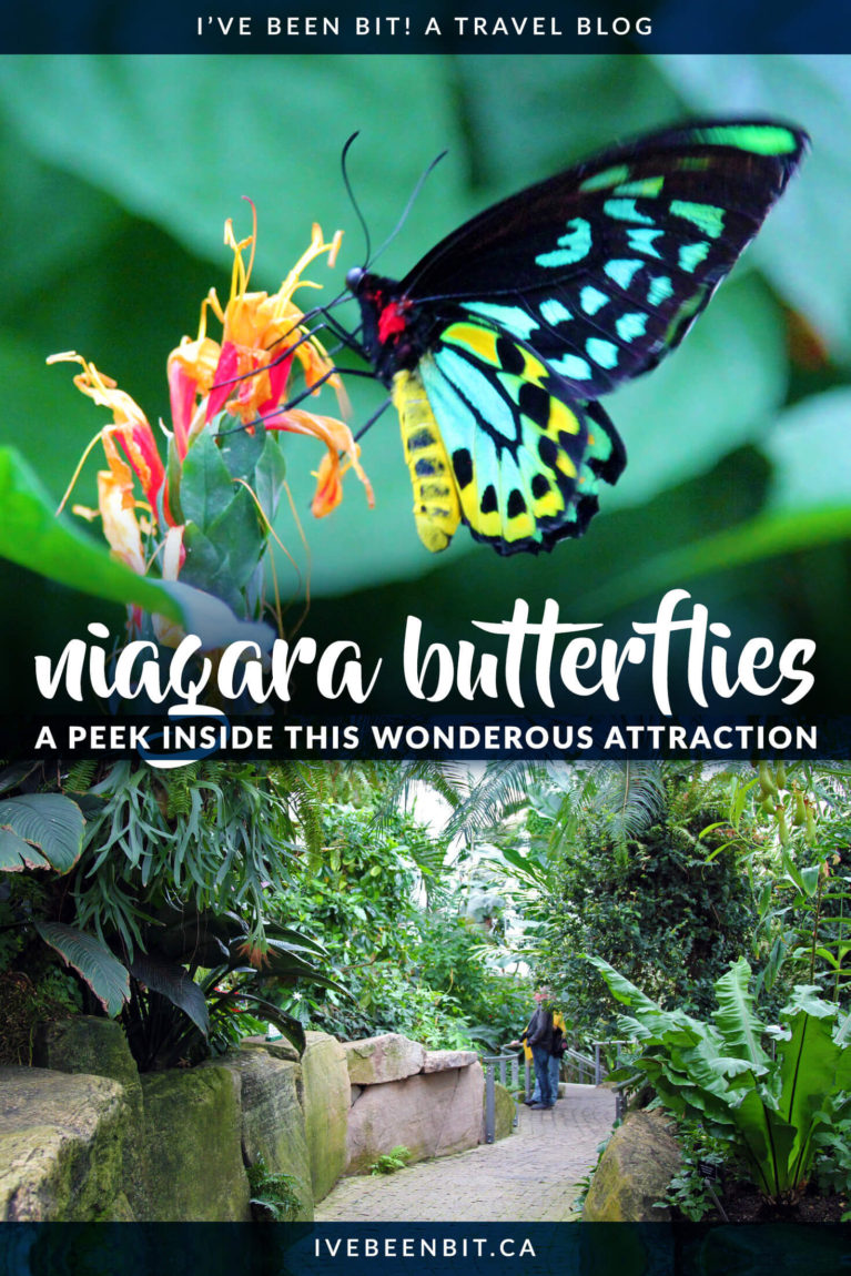 This is one of the best indoor attractions in Niagara Falls and its beauty will sweep you of your feet as you're surrounded by over 2000 butterflies flying free around you! No matter what time of the year it is, you need to visit the Niagara Parks Butterfly Conservatory. | Niagara Falls Canada Tips | Things to Do in Niagara Falls Ontario Canada | IveBeenBit.ca
