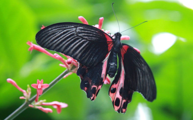 Red and Black Butterfly on a Flower :: I've Been Bit! Travel Blog