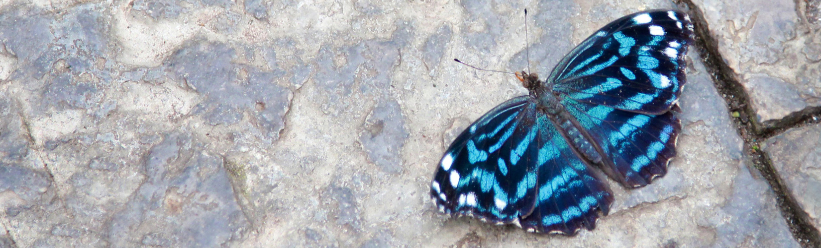 Foto Friday :: Niagara Parks' Butterfly Conservatory