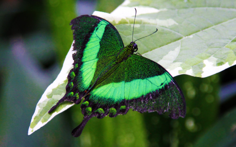 Checking Out the Butterflies is Just One of the Many Great Niagara Activities :: I've Been Bit! A Travel Blog