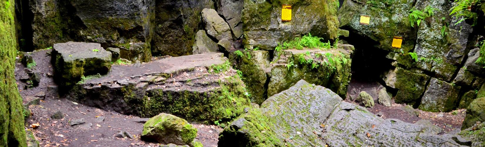Scenic Caves Eco Adventure Tour: Treetops, Ziplines & More! :: I've Been Bit! Travel Blog