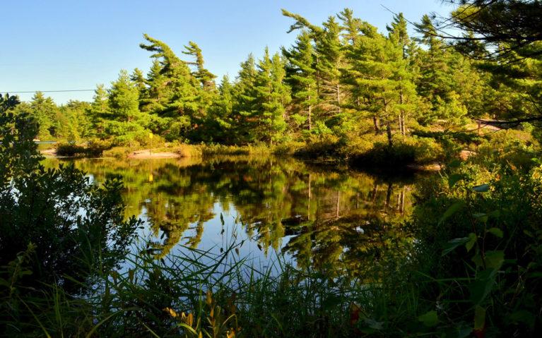 Golden Hour at Fairy Lake :: I've Been Bit! Travel Blog