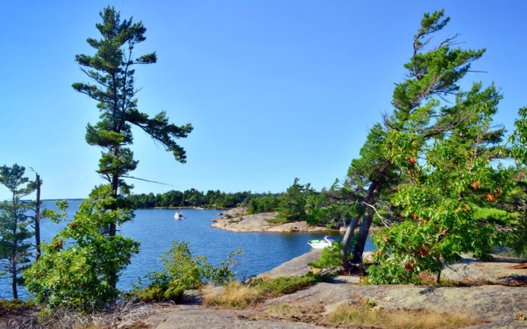 Some of the White Pines Along Georgian Bay :: I've Been Bit! Travel Blog