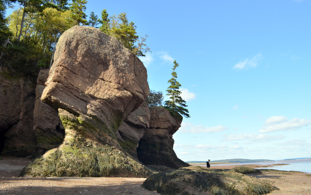 View of the Hopewell Rocks during low tide :: I've Been Bit! Travel Blog