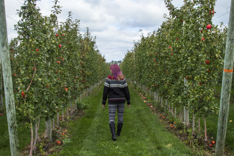 Lindsay walking through the fields at T&K Ferri Orchards while apple picking in Grey County :: I've Been Bit! A Travel Blog