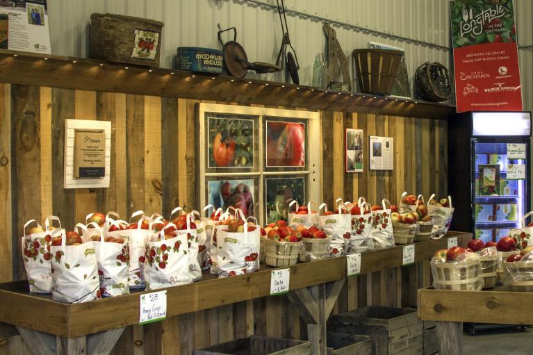 I've Been Bit! A Travel Blog :: Grey County Autumn Adventures - Apple Picking T&K Ferri Orchards Market
