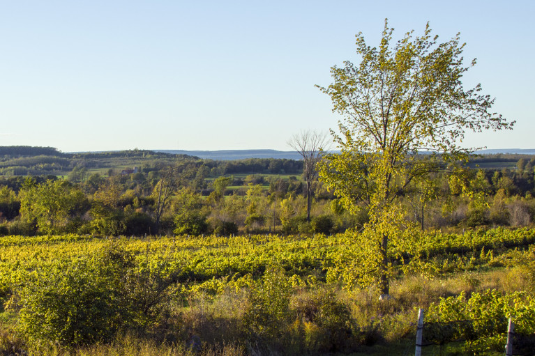 Autumn Colours in Grey County Ontario Canada :: I've Been Bit! A Travel Blog