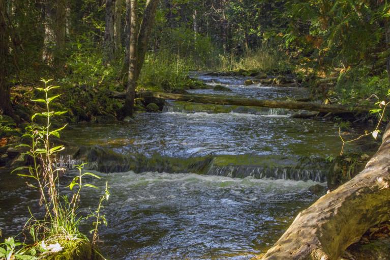 I've Been Bit! A Travel Blog - Grey County Autumn Adventures Syndenham River