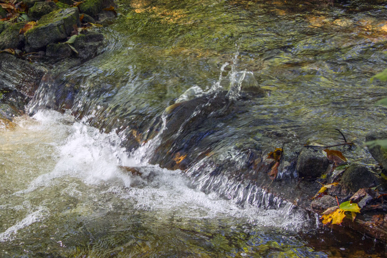 Chinook Salmon Jump along the Syndenham River in Grey County Ontario :: I've Been Bit! A Travel Blog