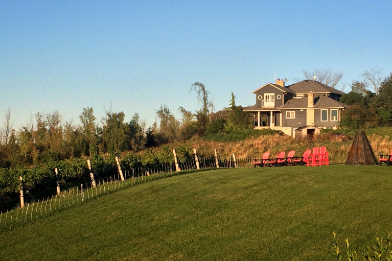 You can't beat a beautiful view of the vines during a Grey County getaway! :: I've Been Bit! Travel Blog