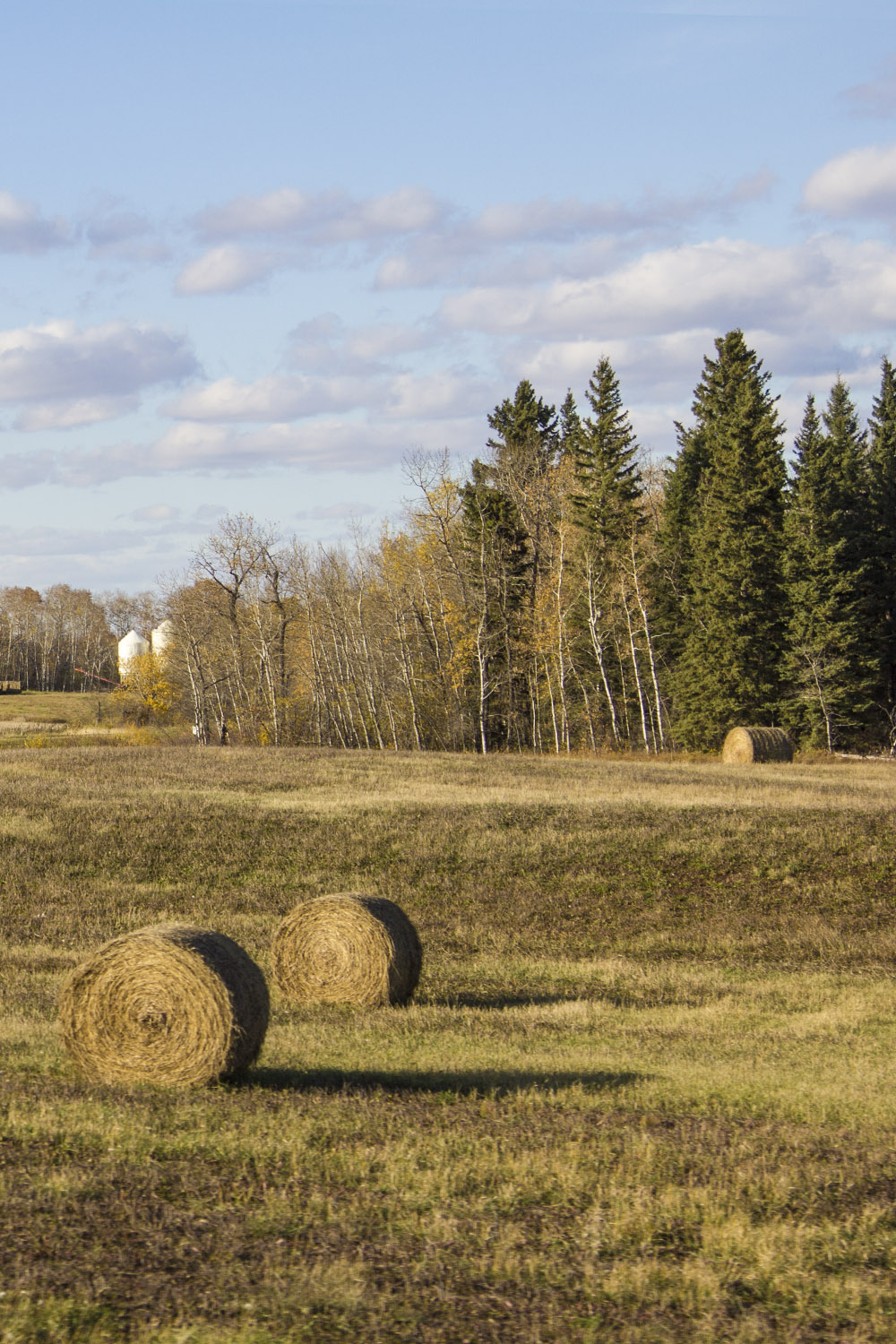 Hay Bales in Field - 20+ Photos Guaranteed to Inspire a Manitoba Road Trip :: I've Been Bit! A Travel Blog