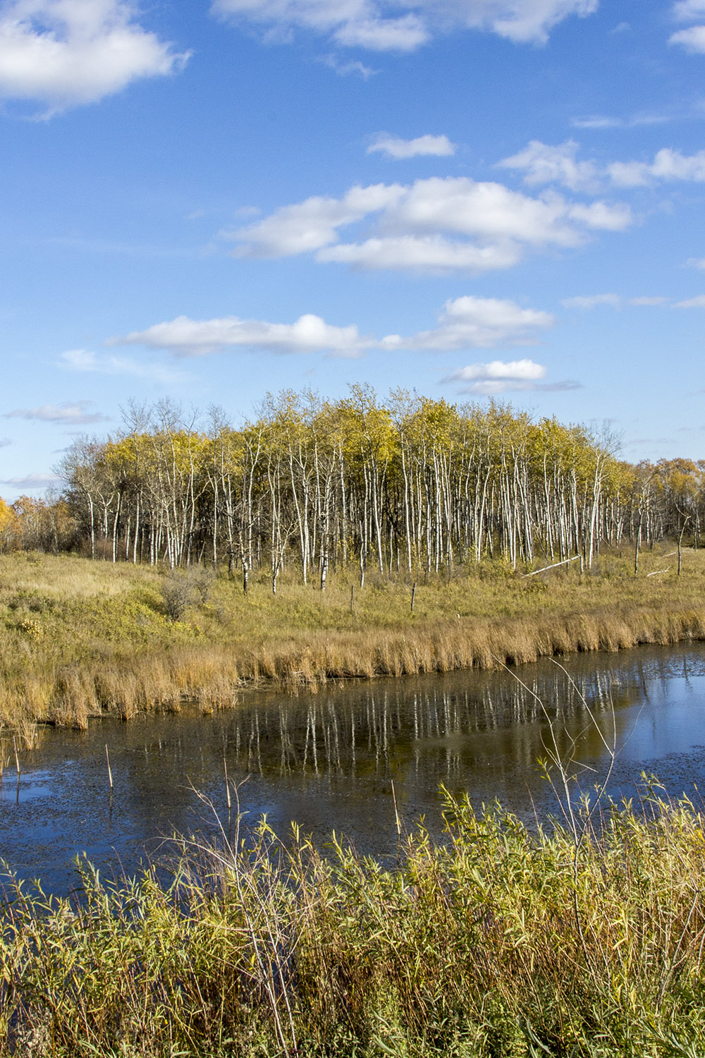Blue Skies and Autumn Colours - 20+ Photos Guaranteed to Inspire a Manitoba Road Trip :: I've Been Bit! A Travel Blog