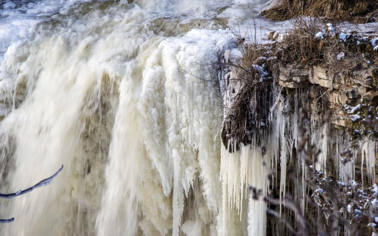 Close Up of Crest - Hiking Hamilton's Borer's Falls :: I've Been Bit! A Travel Blog