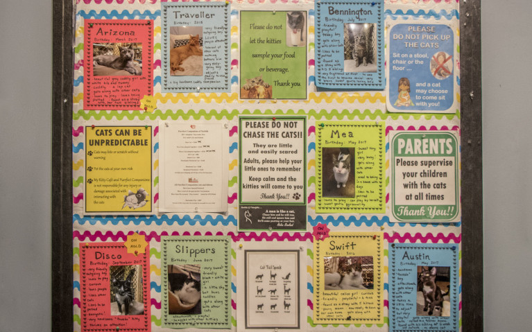 Cat Adoption Board at My Kitty Cafe :: I've Been Bit! A Travel Blog