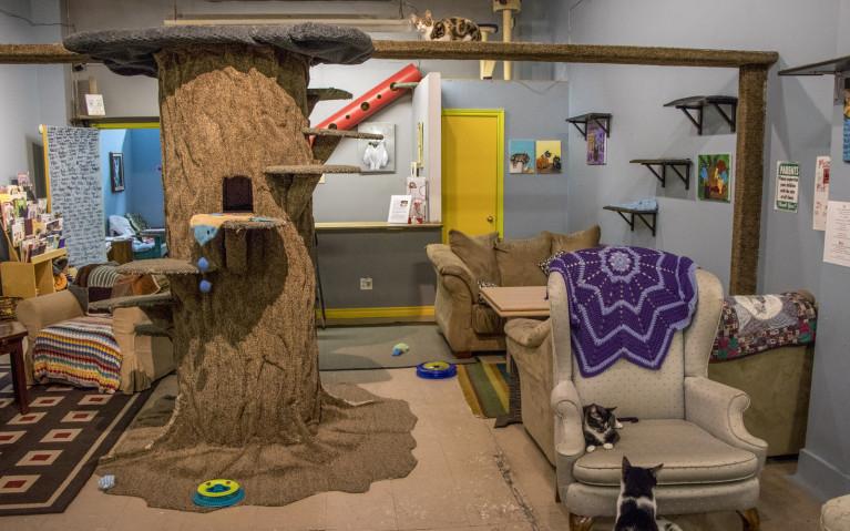 Inside of Guelph's Cat Cafe :: I've Been Bit! A Travel Blog