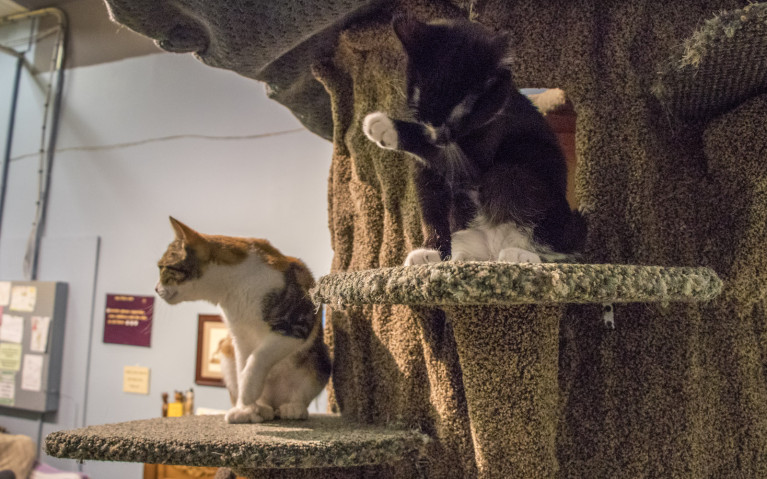 Tree Cats at My Kitty Cafe :: I've Been Bit! A Travel Blog