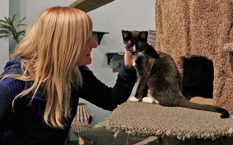 Hanging out with My Kitty Cafe's Disco :: I've Been Bit! A Travel Blog