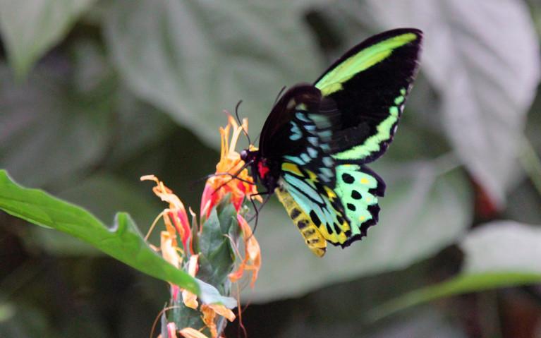 Niagara Parks Butterfly Conservatory :: I've Been Bit! A Travel Blog