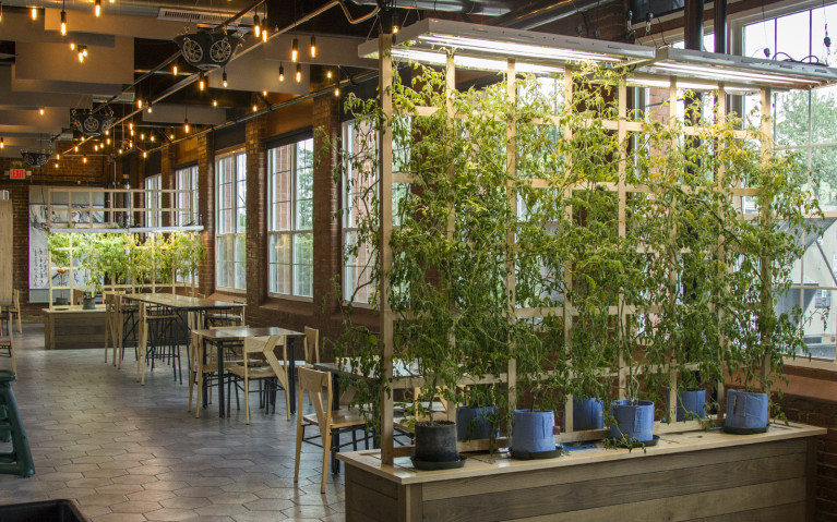 Plants Growing Indoors at Mill 180 Park - The World's First Hydroponic Park :: I've Been Bit! A Travel Blog