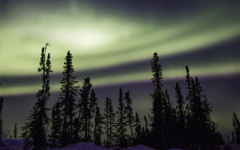 Northern Lights (definitely a Canada bucket list item!) swirling across the sky behind the silhouetted tree line :: I've Been Bit! Travel Blog