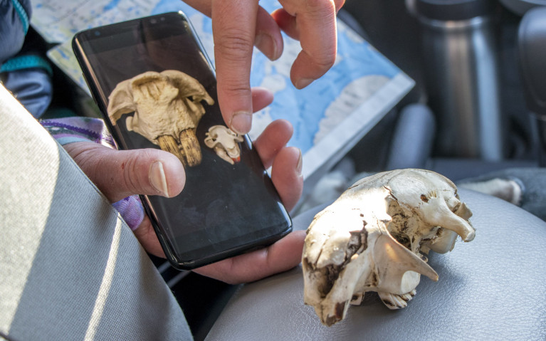 In What Other Yellowknife Tour Will You See a Beaver Skull? :: I've Been Bit! A Travel Blog