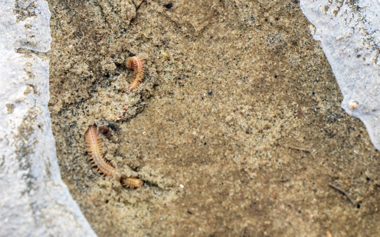 Digging for Critters in the Tidal Pools :: I've Been Bit! A Travel Blog