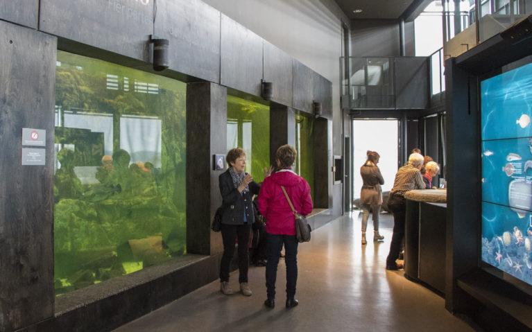 Inside the Musée Du Nord in La Baie :: I've Been Bit! A Travel Blog
