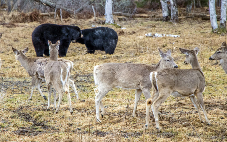 See the Wildlife Mingle :: I've Been Bit! A Travel Blog