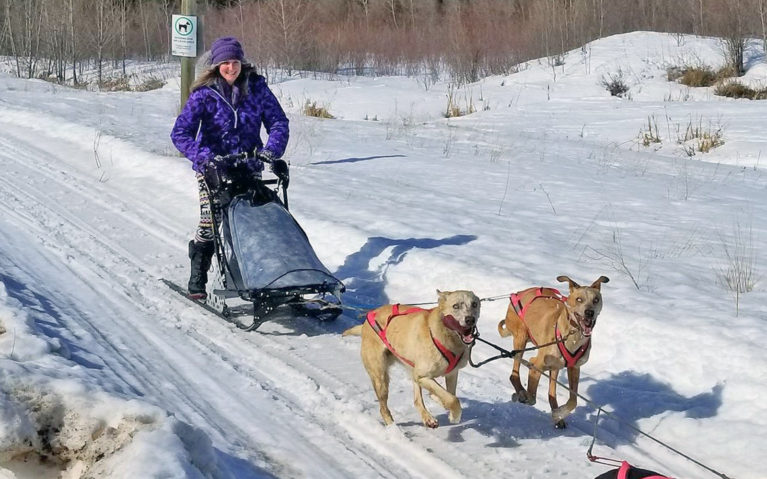 Dogsledding with Midnight Sun Kennels :: I've Been Bit! A Travel Blog