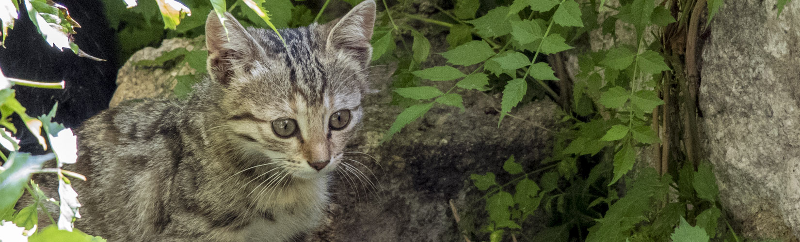 It's Not Just Istanbul, Say Hello to The Cats of Turkey :: I've Been Bit! A Travel Blog