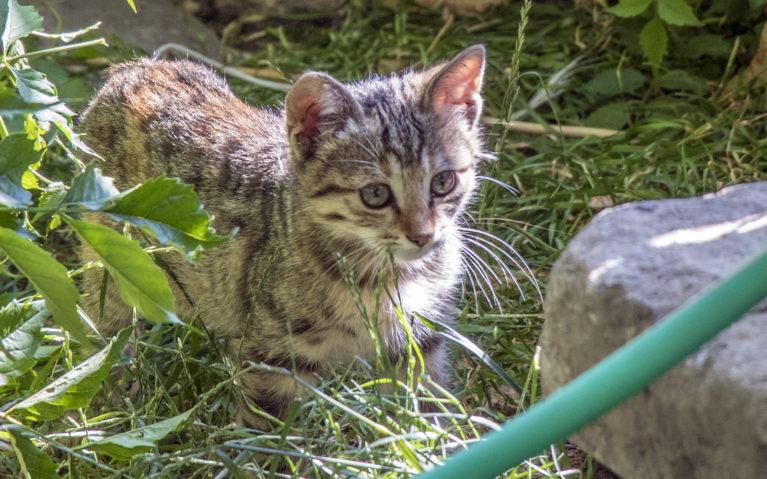 Cat in Turkey :: I've Been Bit! A Travel Blog