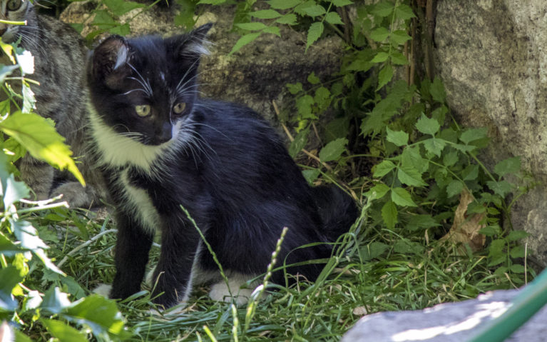 Cats of Turkey :: I've Been Bit! A Travel Blog