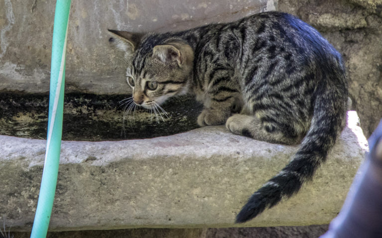 Turkish Feline :: I've Been Bit! A Travel Blog