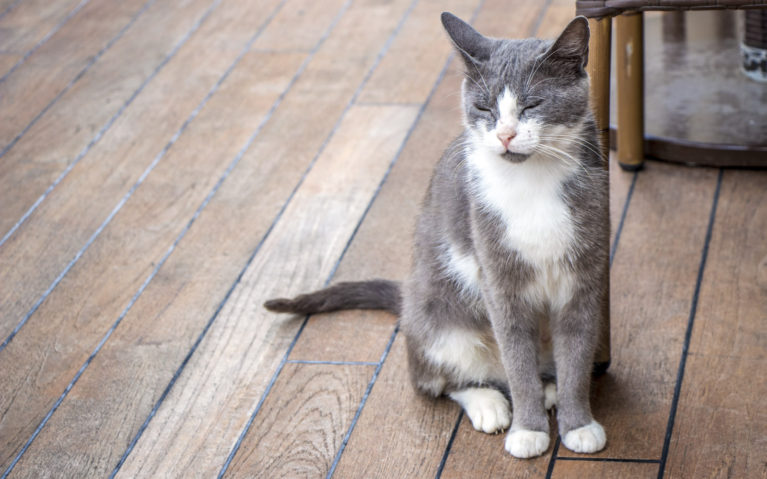 Stray Cats in Istanbul :: I've Been Bit! A Travel Blog
