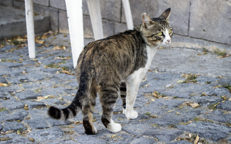Turkish Cat :: I've Been Bit! A Travel Blog