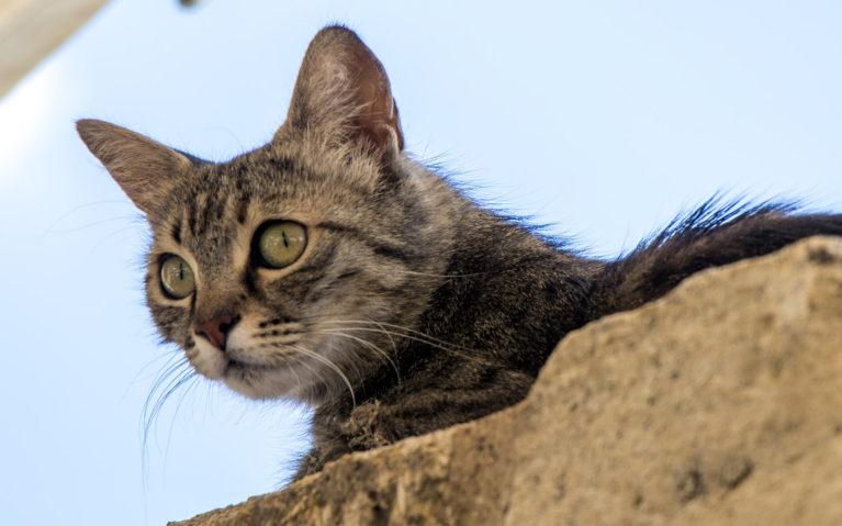 Kedi Cats of Istanbul :: I've Been Bit! A Travel Blog