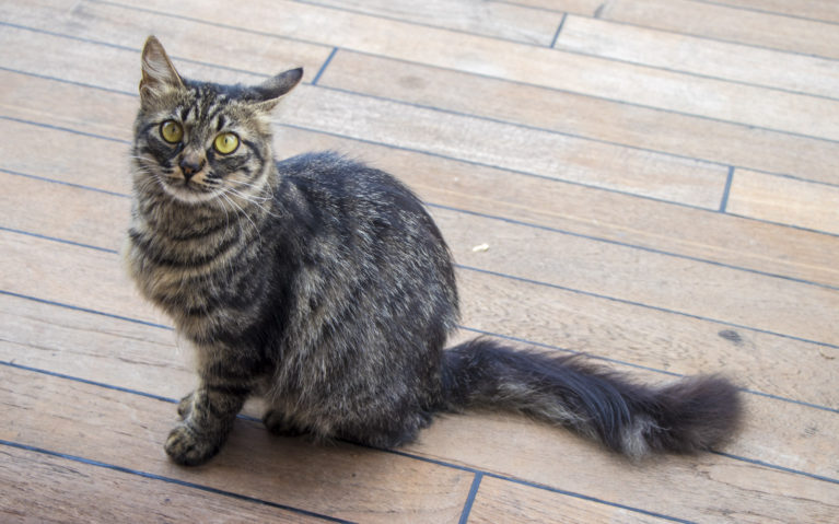 Stray Cats in Turkey :: I've Been Bit! A Travel Blog